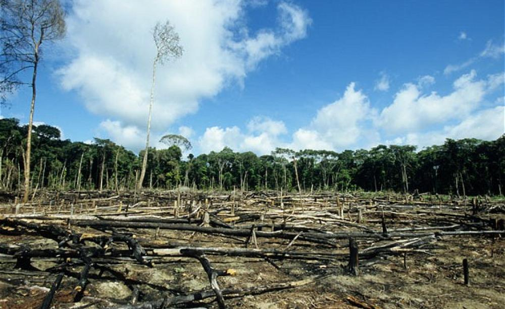 iklim-krizi-ormansizlasma